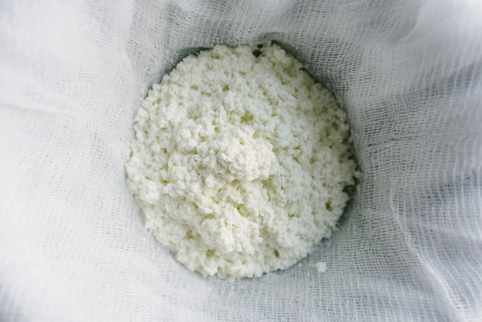 Homemade ricotta cheese straining in cheesecloth.