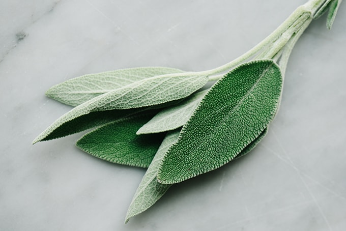 A sprig of fresh sage on a marble countertop.